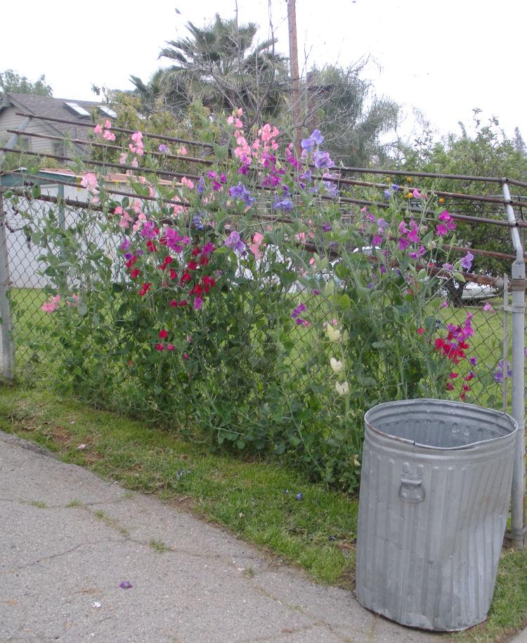 Flowergarden3